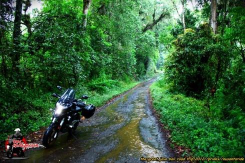 senduro forest
